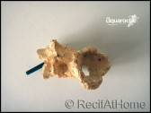 Coupelle pour corail aquaroche