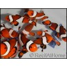 Amphiprion ocellaris poissons clowns