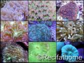 Kit coraux durs LPS