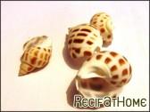 10 Coquilles Babylonia pour Bernard l'ermite