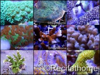 Kit coraux durs SPS