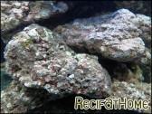 Pierres vivantes origine Indonésie 15kg roche vivante