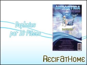 Daphnie Antartica 100g