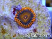 ZOA Orange oxyde ULTRA au polype
