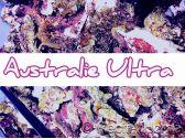 Australie ULTRA pierres vivantes sous Cites le kg