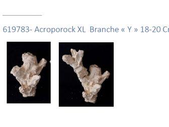 Acroporock XL y 18/20 cm Gauche 619783