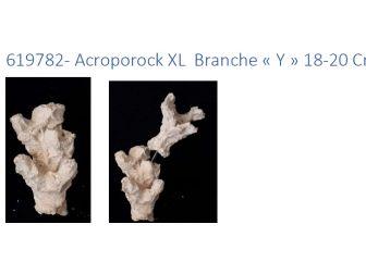 Acroporock XL y 18/20 cm Droite 619782