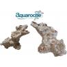 Arche Aquaroche