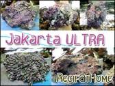 Pierres vivantes JAKARTA ultra 25kg environ