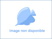 OUATE BLEUE 500 GRS