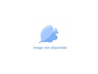 Montastrea Bleu Centre rouge